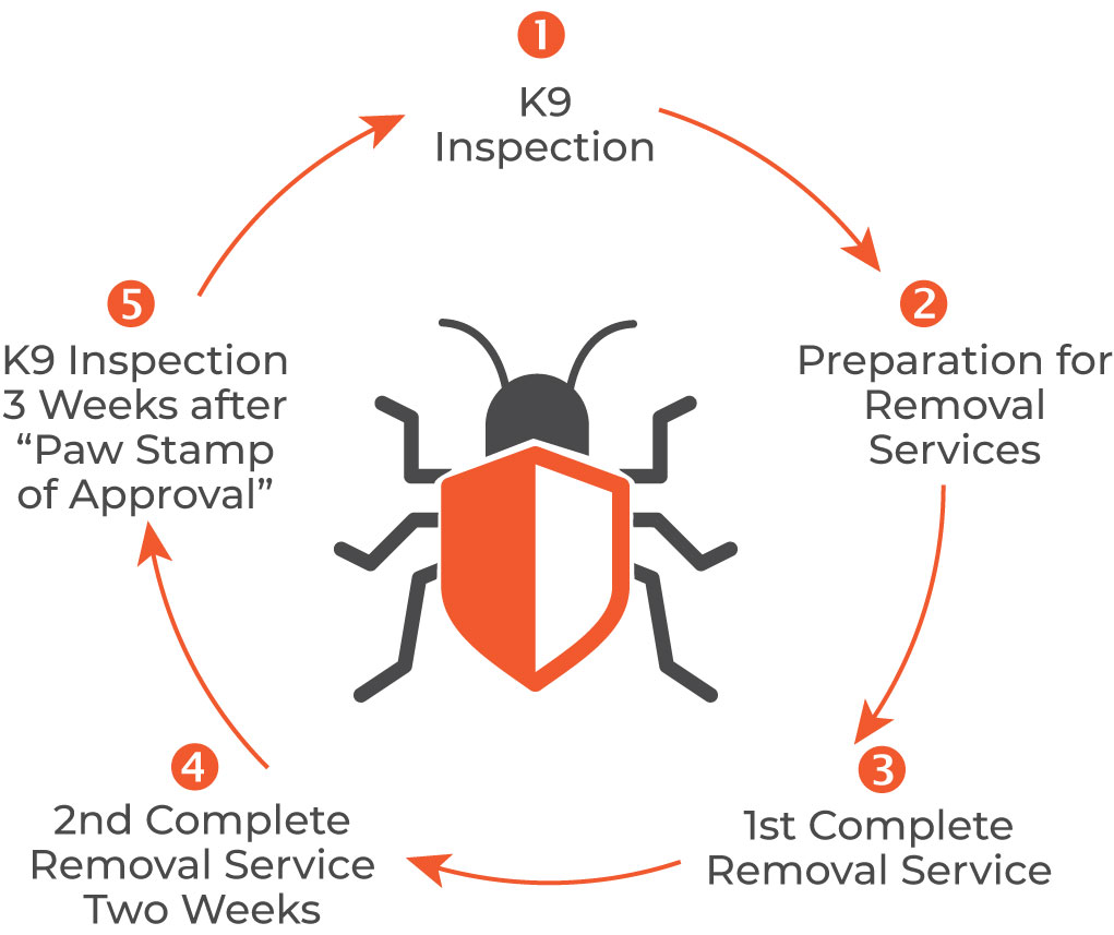 First Defence 5 Step Bed Bug Inspection Service